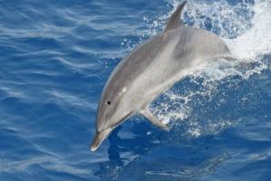 delfines-gomera3-portada
